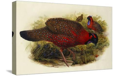 Satyr Tragopan (Ceriornis Satyra) Henry Constantine Richter (1821-1902)-Henry Constantine Richter-Stretched Canvas Print