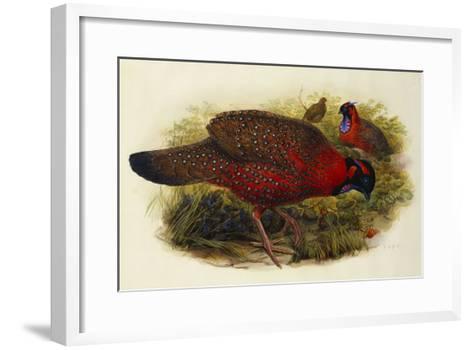 Satyr Tragopan (Ceriornis Satyra) Henry Constantine Richter (1821-1902)-Henry Constantine Richter-Framed Art Print