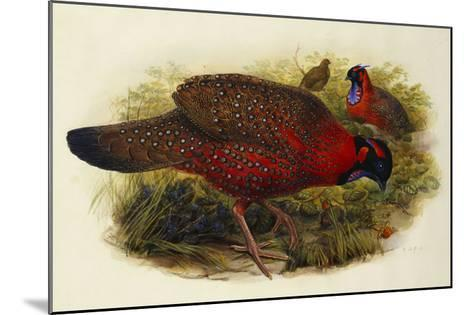 Satyr Tragopan (Ceriornis Satyra) Henry Constantine Richter (1821-1902)-Henry Constantine Richter-Mounted Giclee Print
