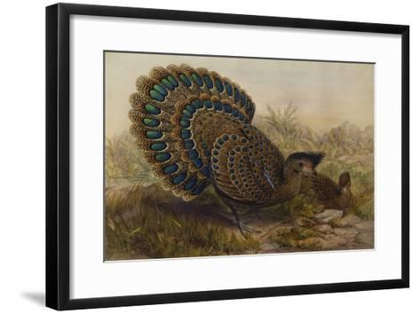 Malayan Peacock Pheasant (Polyplectron Bicalcaratum)-Henry Constantine Richter-Framed Art Print