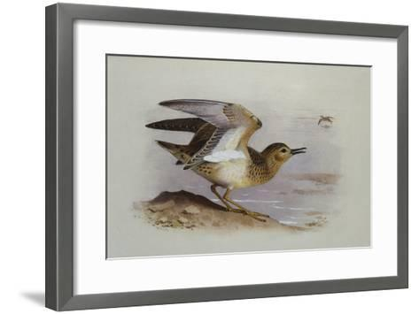 A Buff-Breasted Sandpiper-Archibald Thorburn-Framed Art Print