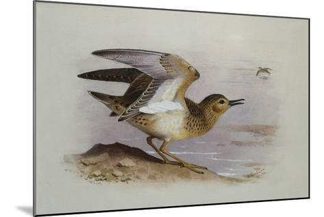 A Buff-Breasted Sandpiper-Archibald Thorburn-Mounted Giclee Print