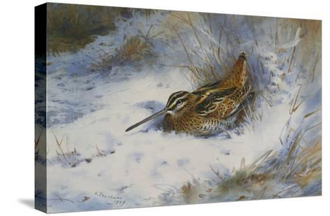 A Snipe in the Snow-Archibald Thorburn-Stretched Canvas Print
