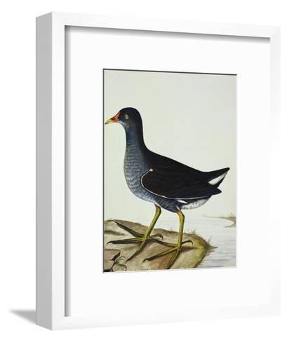 A Moorhen-Christopher Atkinson-Framed Art Print