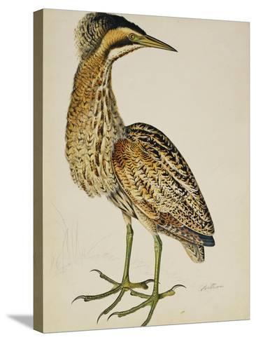 A Bittern-Christopher Atkinson-Stretched Canvas Print