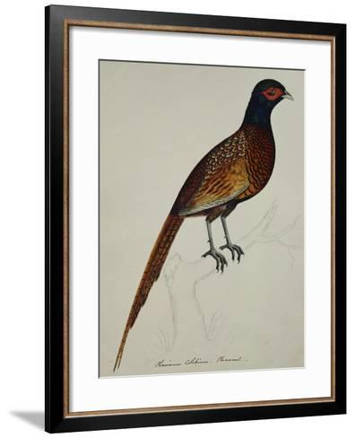 A Pheasant (Phasianus Colchicus)-Christopher Atkinson-Framed Art Print