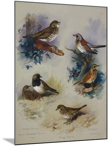 Thrushes-Archibald Thorburn-Mounted Giclee Print