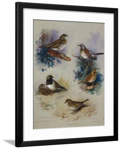 Thrushes-Archibald Thorburn-Framed Art Print