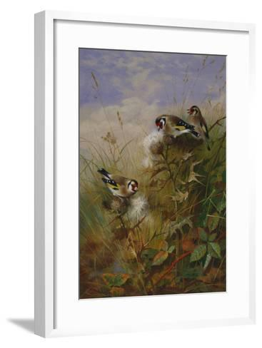 Goldfinches on Thistles-Archibald Thorburn-Framed Art Print