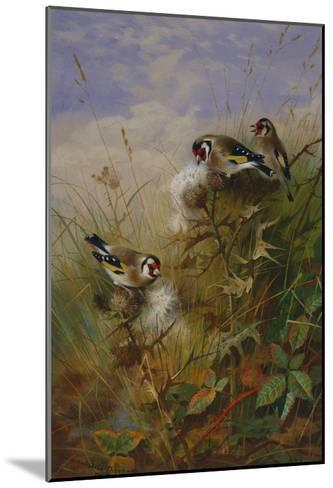 Goldfinches on Thistles-Archibald Thorburn-Mounted Giclee Print