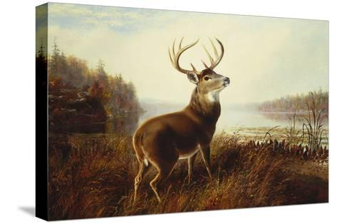 A Stag by a Lake-Arthur Fitzwilliam Tait-Stretched Canvas Print
