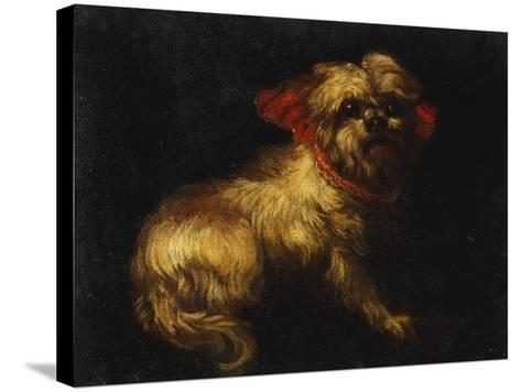 Maltese Terrier with a Red Collar- School of Madrid-Stretched Canvas Print