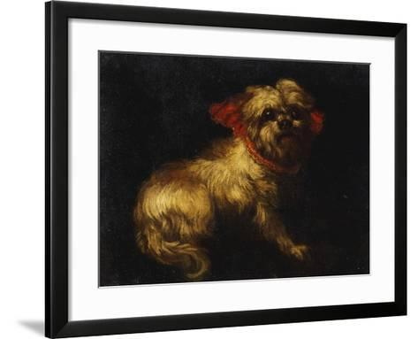 Maltese Terrier with a Red Collar- School of Madrid-Framed Art Print