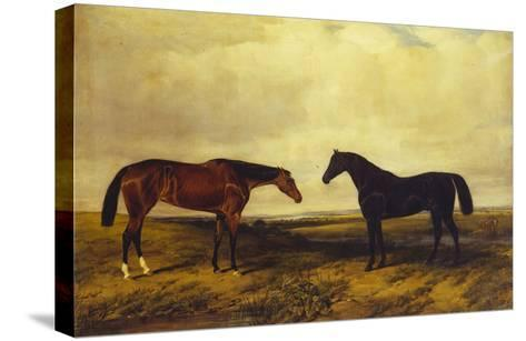 The Earl of Granards's Bright Bay Filly and Dark Bay Stallion Standing in an Extensive Landscape-William Luker-Stretched Canvas Print