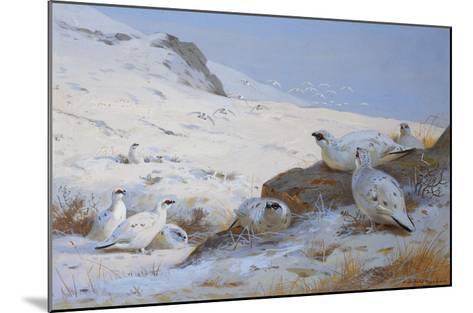 Ptarmigan-Archibald Thorburn-Mounted Giclee Print