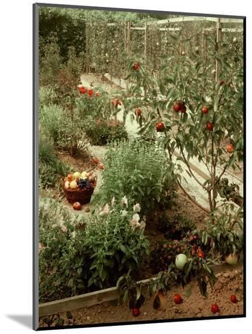 House & Garden - January 1956-Andr? Kert?sz-Mounted Premium Photographic Print