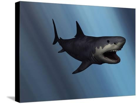 A Megalodon Shark from the Cenozoic Era-Stocktrek Images-Stretched Canvas Print