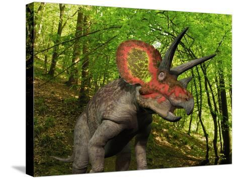 A Colorful Triceratops Wanders a Cretaceous Forest-Stocktrek Images-Stretched Canvas Print