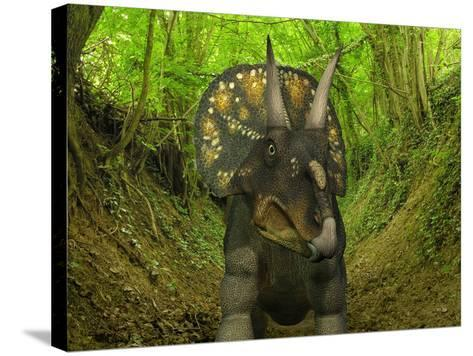 A Nedoceratops Wanders a Cretaceous Forest-Stocktrek Images-Stretched Canvas Print