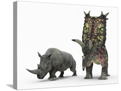An Adult Pentaceratops Compared to a Modern Adult White Rhinoceros-Stocktrek Images-Stretched Canvas Print