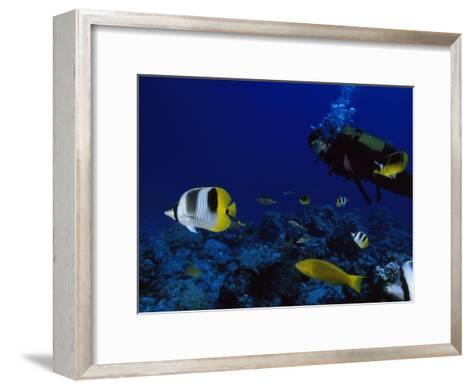 A Diver Swims with Butterfly Fish and Other Fish-Tim Laman-Framed Art Print