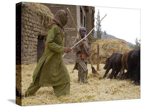Women with Yaks Threshing Barley on the Road from Leh to Kargil-Steve Winter-Stretched Canvas Print
