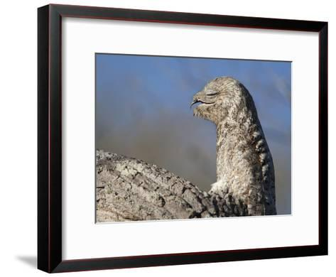 Portrait of a Great Potoo, Nyctibius Grandis-Roy Toft-Framed Art Print
