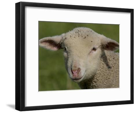 Portrait of a Lamb a Couple of Days Old-Joe Petersburger-Framed Art Print