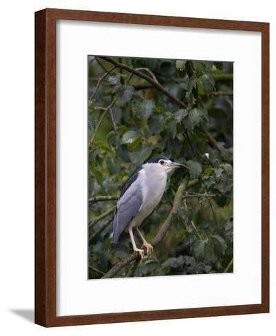 Portrait of a Bird Perched in a Tree-Joe Petersburger-Framed Art Print