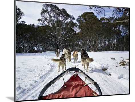 A Team of Siberian Husky Sled Dogs Pull a Sled Through Alpine Snow-Jason Edwards-Mounted Photographic Print