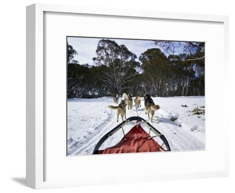 A Team of Siberian Husky Sled Dogs Pull a Sled Through Alpine Snow-Jason Edwards-Framed Art Print