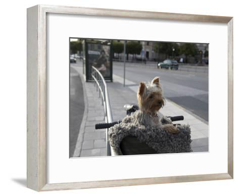 Small Dog in Bicycle Basket-Keenpress-Framed Art Print