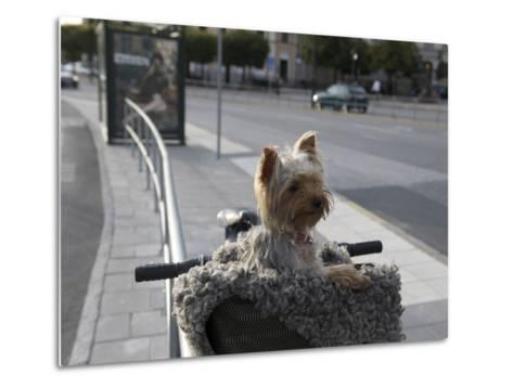 Small Dog in Bicycle Basket-Keenpress-Metal Print