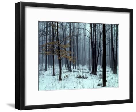 An Early Winter Forest Scene in Eastern Ontario-Kenneth Ginn-Framed Art Print