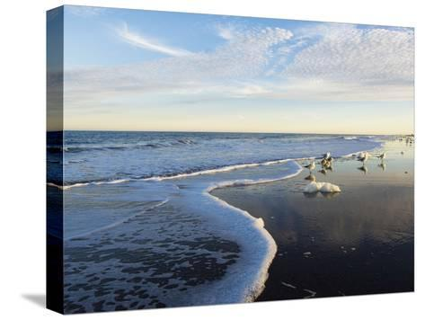 Common Sea Gulls and Surf-Mauricio Handler-Stretched Canvas Print