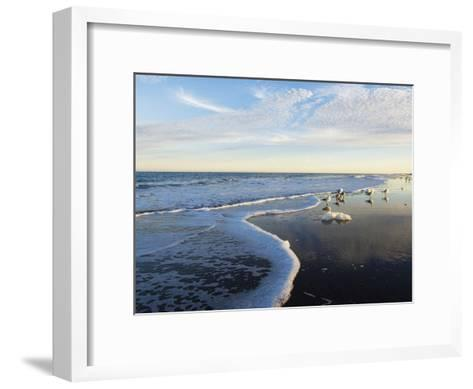 Common Sea Gulls and Surf-Mauricio Handler-Framed Art Print