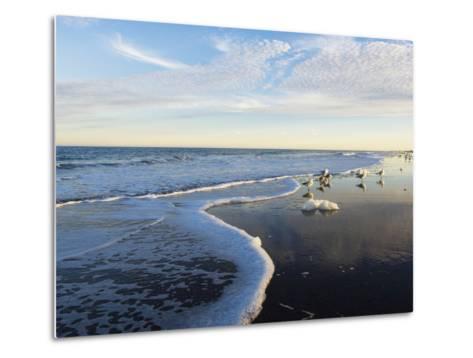 Common Sea Gulls and Surf-Mauricio Handler-Metal Print