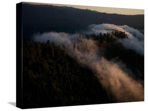Aerials over Headwaters Forest Reserve-Michael Nichols-Stretched Canvas Print