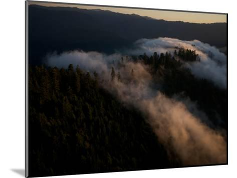 Aerials over Headwaters Forest Reserve-Michael Nichols-Mounted Photographic Print