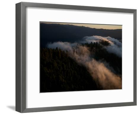 Aerials over Headwaters Forest Reserve-Michael Nichols-Framed Art Print