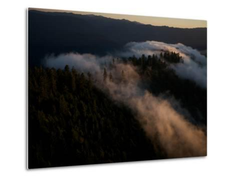 Aerials over Headwaters Forest Reserve-Michael Nichols-Metal Print