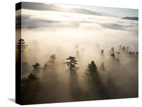 The Largest Patch of Old Growth Redwoods Remaining-Michael Nichols-Stretched Canvas Print