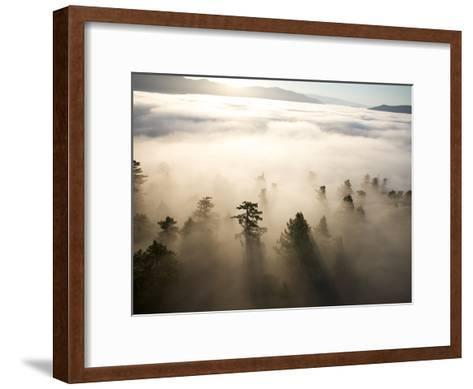 The Largest Patch of Old Growth Redwoods Remaining-Michael Nichols-Framed Art Print