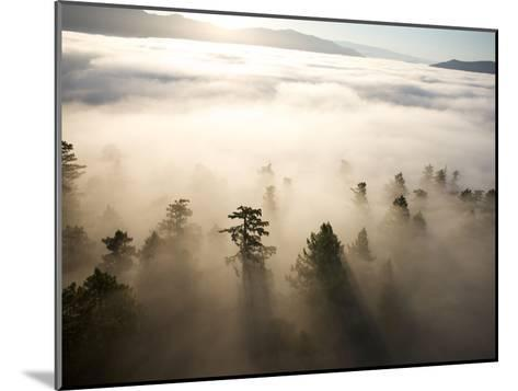 The Largest Patch of Old Growth Redwoods Remaining-Michael Nichols-Mounted Photographic Print