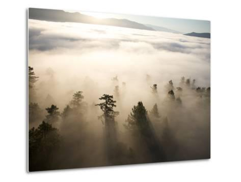 The Largest Patch of Old Growth Redwoods Remaining-Michael Nichols-Metal Print