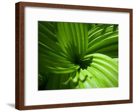 Plant Life in a Redwood Forest-National Geographic Photographer-Framed Art Print
