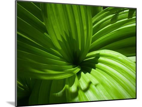 Plant Life in a Redwood Forest-National Geographic Photographer-Mounted Photographic Print