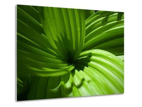Plant Life in a Redwood Forest-National Geographic Photographer-Metal Print