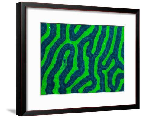 A Tiny Translucent Fish Hides on Brightly Colored Coral-Ben Horton-Framed Art Print