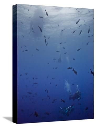 Divers Descend Through Schools of Fish to Reach the Reef Below-Ben Horton-Stretched Canvas Print